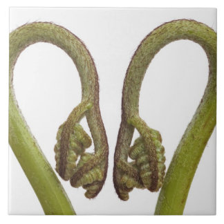 Fern sprouts 2 tile