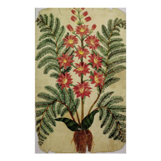 Fern with red and yellow flowers poster