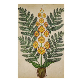 Fern with yellow flowers poster
