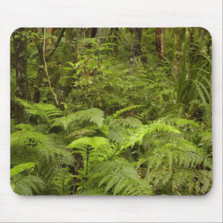 Ferns and native bush near Matai Falls, Catlins Mousepad