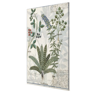 Ferns, Brambles and Flowers Canvas Print