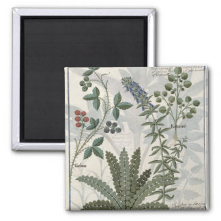 Ferns, Brambles and Flowers Magnet