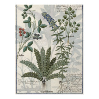 Ferns, Brambles and Flowers Postcard