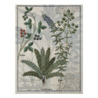 Ferns, Brambles and Flowers Poster