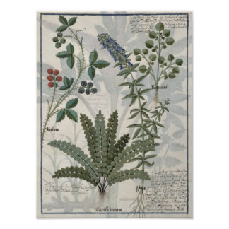 Ferns, Brambles and Flowers Posters