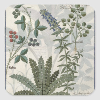 Ferns, Brambles and Flowers Square Sticker