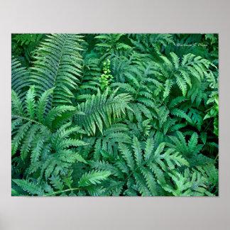 Ferns: Canvas--flat Poster