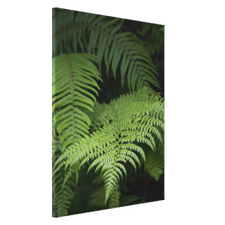 Ferns Canvas Print