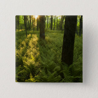 Ferns in the forest in Grafton, Massachusetts. 15 Cm Square Badge
