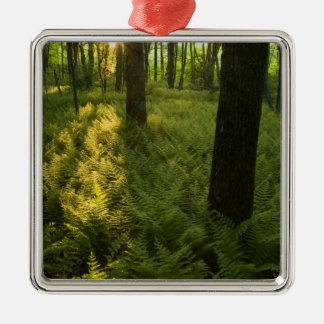 Ferns in the forest in Grafton, Massachusetts. Christmas Ornament