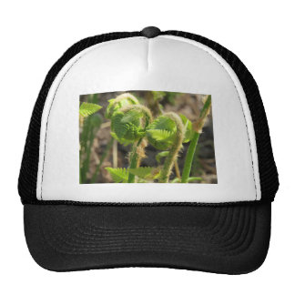 Ferns Just Waking Up in Spring Hat
