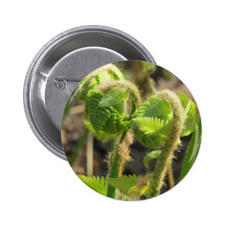 Ferns Just Waking Up in Spring Pins