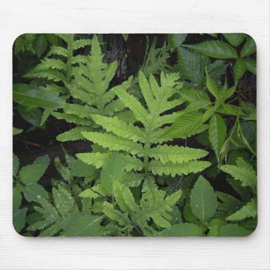 Ferns Mouse Pad