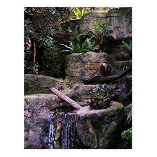Ferny grotto postcard