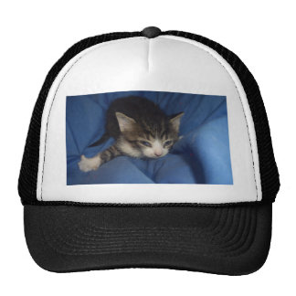 Ferocious Kitty Cap