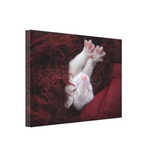 Ferret December - Stretched Canvas Prints