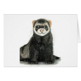 Ferret fun! card
