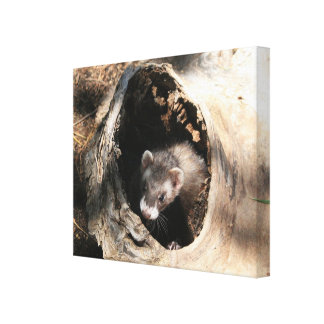 Ferret in a log Canvas Print
