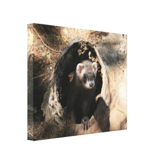 Ferret in a log Canvas Prints