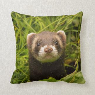 Ferret in grass cushion