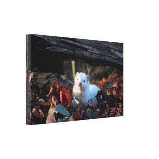 Ferret in the woods - canvas - canvas print