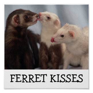 Ferret Kisses Poster