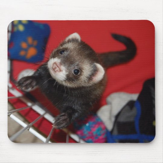 Ferret Mouse Pad