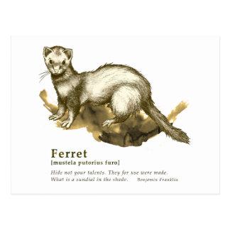 Ferret - sepia ポストカード
