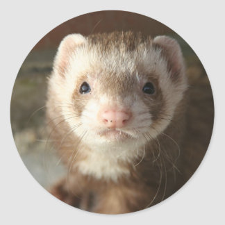Ferret Sticker close-up