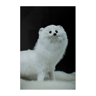 Ferret Taxidermy Mount Fine Art Photograph