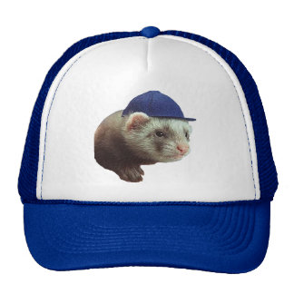 Ferret Wearing Hat