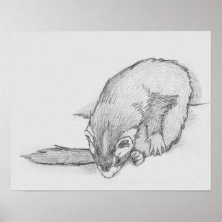"""Ferret Wheel"" Ferret Drawing Poster"