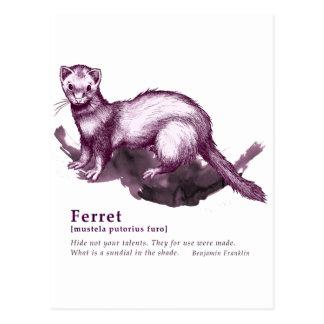 Ferret - wine ポストカード