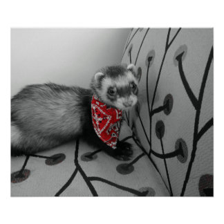 Ferret With Red Bandana Poster