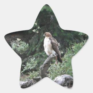 Ferruginous Hawk Star Sticker