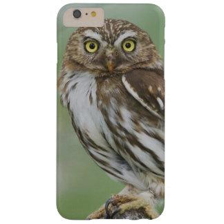 Ferruginous Pygmy-Owl, Glaucidium brasilianum, 3 Barely There iPhone 6 Plus Case