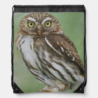 Ferruginous Pygmy-Owl, Glaucidium brasilianum, 3 Drawstring Bag