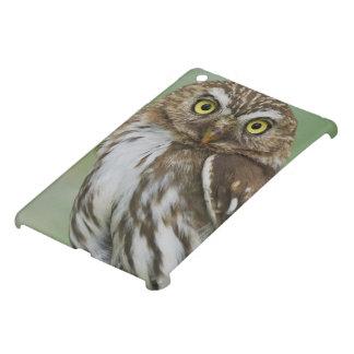 Ferruginous Pygmy-Owl, Glaucidium brasilianum, 3 iPad Mini Covers