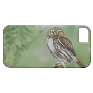 Ferruginous Pygmy-Owl, Glaucidium brasilianum, 3 iPhone 5 Covers
