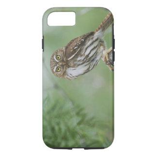 Ferruginous Pygmy-Owl, Glaucidium brasilianum, 3 iPhone 8/7 Case