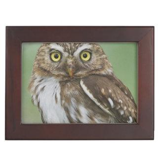 Ferruginous Pygmy-Owl, Glaucidium brasilianum, 3 Keepsake Box