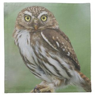 Ferruginous Pygmy-Owl, Glaucidium brasilianum, 3 Napkin