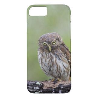 Ferruginous Pygmy-Owl, Glaucidium brasilianum, 6 iPhone 8/7 Case