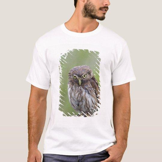 Ferruginous Pygmy-Owl, Glaucidium brasilianum, 6 T-Shirt