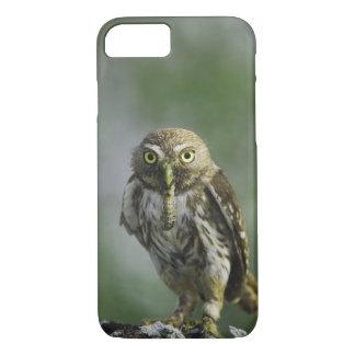 Ferruginous Pygmy-Owl, Glaucidium brasilianum, 7 iPhone 8/7 Case