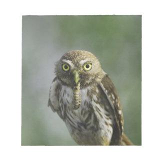 Ferruginous Pygmy-Owl, Glaucidium brasilianum, 7 Notepad