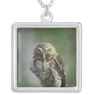 Ferruginous Pygmy-Owl, Glaucidium brasilianum, 7 Silver Plated Necklace
