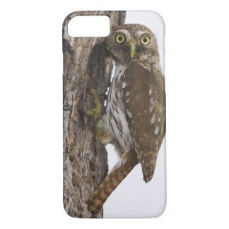 Ferruginous Pygmy-Owl, Glaucidium brasilianum, 8 iPhone 8/7 Case