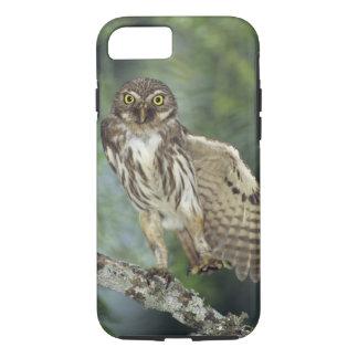 Ferruginous Pygmy-Owl, Glaucidium brasilianum, iPhone 8/7 Case