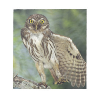 Ferruginous Pygmy-Owl, Glaucidium brasilianum, Notepad